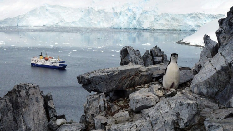 Penguins scamper on rocks while a ship from the Polar Circle Cruise navigates an open bay in Antarctica