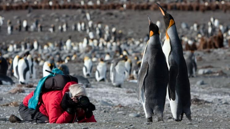 A person kneels down to take a photograph of penguins in antarctica on an expedition