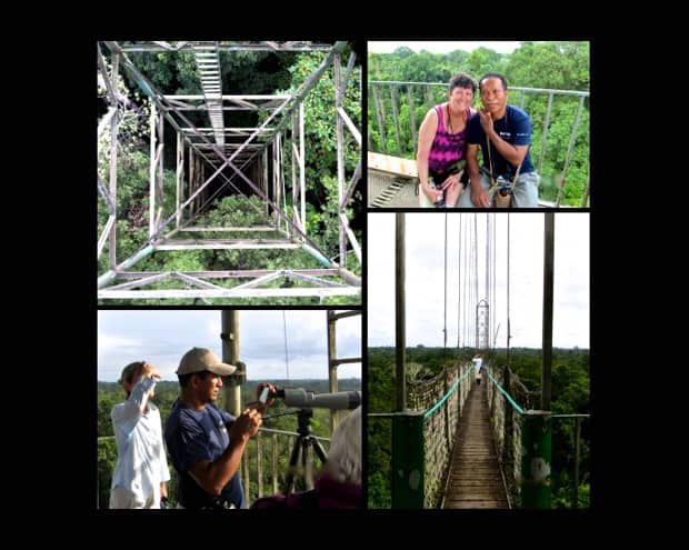 Looking down from the tower into the jungle canopy, traveler with a local guide, view from the top of a viewing platform and a floating walking bridge in the Amazon jungle.
