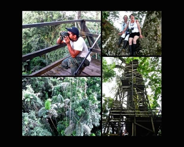 Local guide, looking out into the jungle on a viewing platform, happy travlers sitting on the trunk of a tree, view of the top of the canopy and the tower going up to one of the viewing platforms in the Amazon jungle.