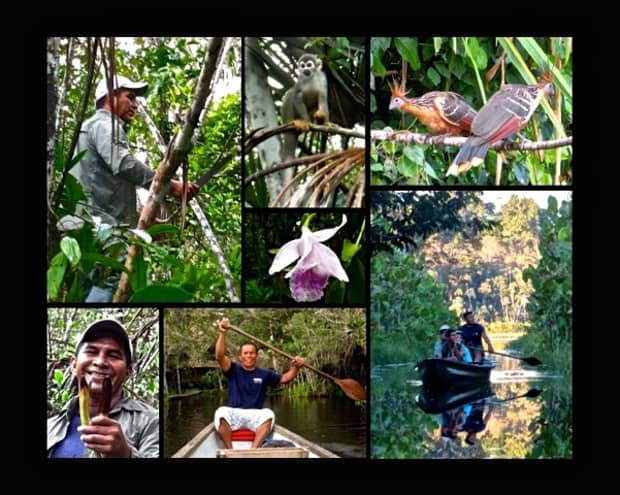 Local guide bushwacking through the jungle, spider monkey on a branch, 2 hoatzin birds, wild orchid, happy guide canoeing, travelers canoeing on the Napo river in the Amazon.