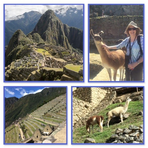 Full view of Machu Picchu in Peru.  Happy traveler petting a llama.  2 llamas milling about on the ruins and a steep stone staircase in Machu Picchu in Peru.