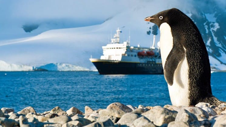 A penguin walks on rocks while the National Geographic Explorer motors on the sea in the background in antarctica