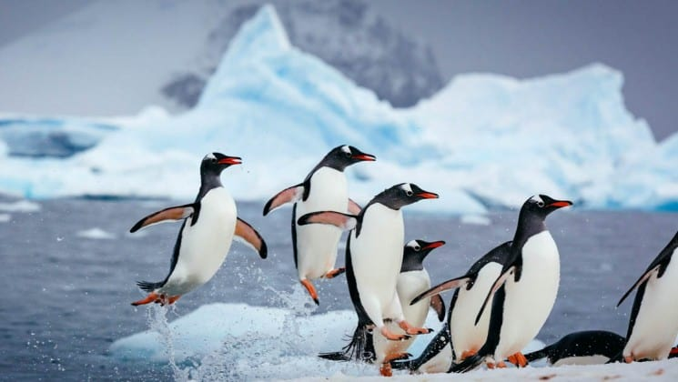 Gentoo penguins crowd on an iceberg with the ocean in the background in antarctica