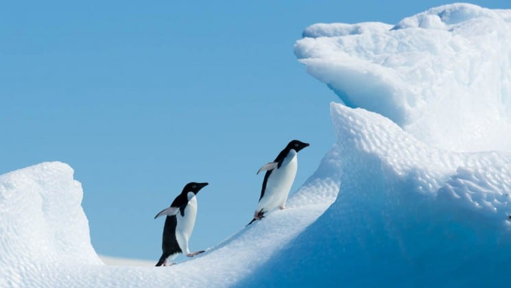Two penguins walk through snowy drifts on a blue sky day in antarctica