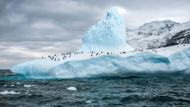 An iceberg crests above the ocean, while a large population of penguins run and walk on top of the snow in the antarctic circle