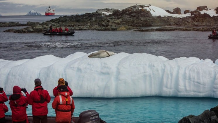 passengers aboard the expedition, part of the quest to the antarctic circle, look at a sea leopard on an iceberg