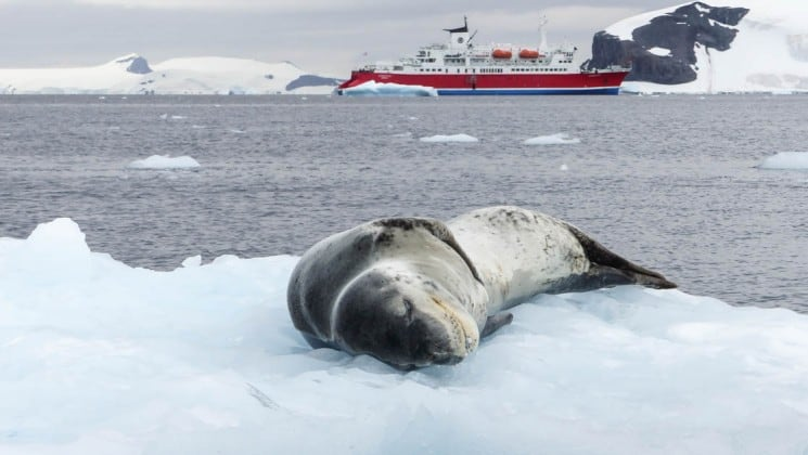 A sea leopard lounges on ice with the ocean and the quest for the antarctic circle ship in the background