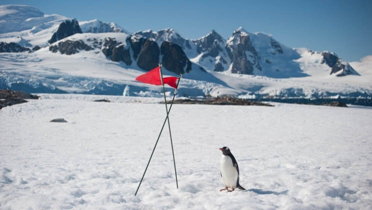A single penguin walks on a sheet of ice toward a red flag with mountains in the background, as part of an expedition with crossing the antarctic circle