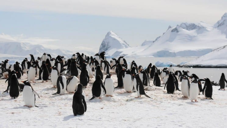 a mound is crowded with penguins with a snow-capped mountain in the distance, as seen from an expedition with crossing the antarctic circle cruise