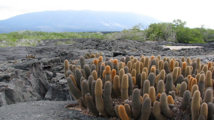 a landscape portrait of the galapagos islands, with cacti, rocks, and bushes