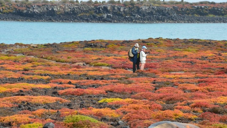 A couple walks through a unique landscape with orange and red colors, and the sea in the background, on the Galapagos Islands, during an excursion from the Coral sister ships.