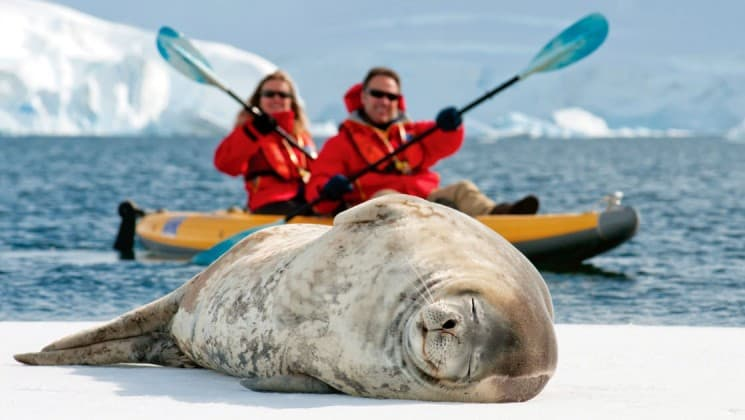 A crab eater seal snoozes on the ice sheet while two people paddle a kayak in the background, on the national geographic white continent voyage