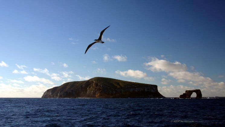 A bird flies into the sky above the Galapagos islands and the sea, at the end of a day on the Grace cruises
