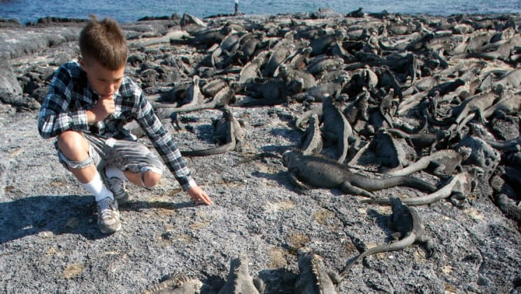 A boy kneels down on the rocks to get a closer look at a group of iguanas surrounding him at the galapagos islands