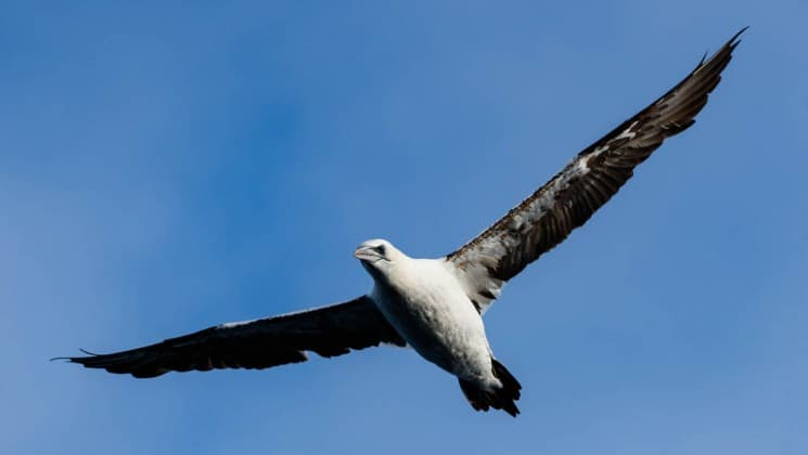 A sea bird takes flight against a blue sky, as seen on the essential greenland expedition cruise to southern coasts and disko bay
