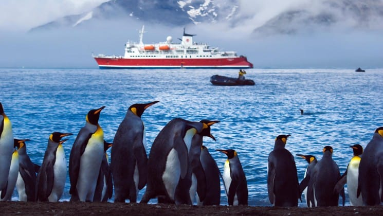A group of penguins stand in the foreground while the spirit of shackleton expedition cruise ship is anchored at sea in the background, in antarctica
