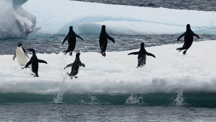 A group of penguins run across an iceberg in antarctica, as seen from the weddell sea voyage cruise ship