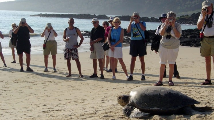 A row of travelers from La Pinta luxury cruise line up to take a photo of a sea turtle on a pristine beach in the Galapagos Islands