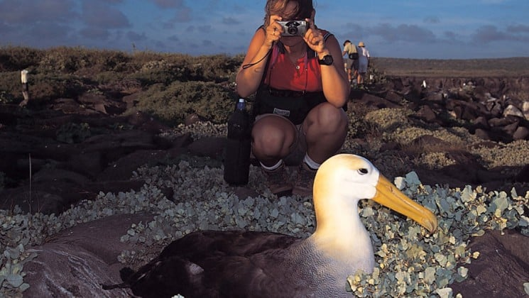 A woman kneels to take a close-up photo of an albatross nesting on the Galapagos Islands