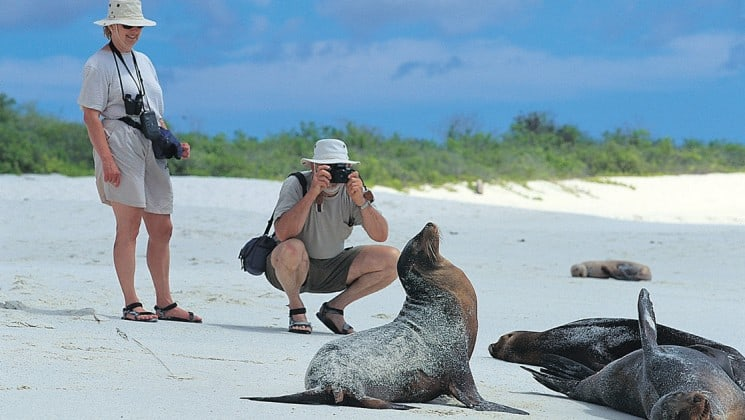 Two people admire and photograph sea lions that are sunbathing on the Galapagos Islands