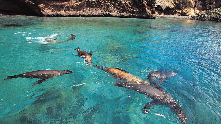 Sea lions swim in turquoise waters at the Galapagos Islands, as seen from La Pinta cruise ship, a sophisticated, upscale travel experience to the Galapagos Islands