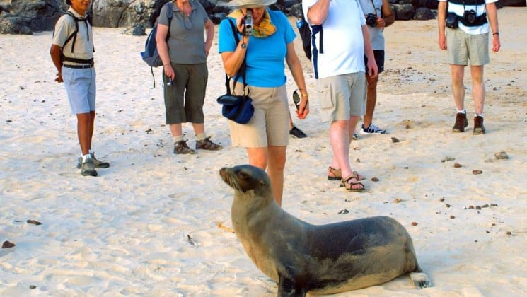 a group of passengers from the sea star journey cruise ship stand in the sand behind a sea lion at the Galapagos islands
