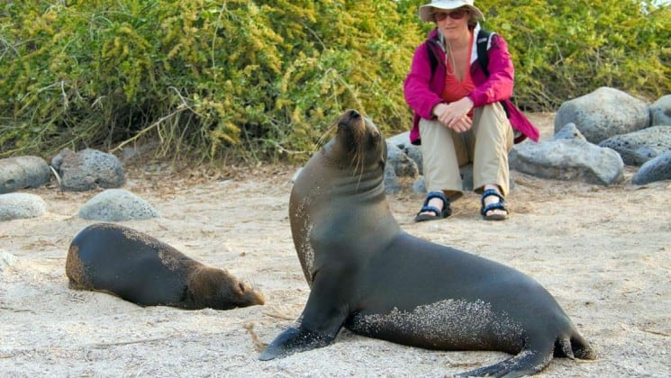 a woman sits on a rock to watch sea lions on the sand at the Galapagos islands, part of an excursion from the sea star journey luxury cruise ship