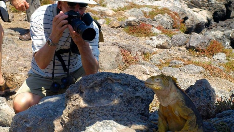 a passenger from the sea star journey luxury cruise takes a photo of an iguana resting among rocks at the Galapagos islands