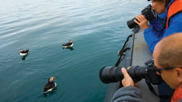 several puffins swim in the ocean while two people take photographs in iceland