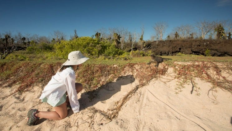 A guest of the Isabela luxury yacht takes an excursion to a white-sand beach and crouches low to the ground to see the iguana at the Galapagos Island