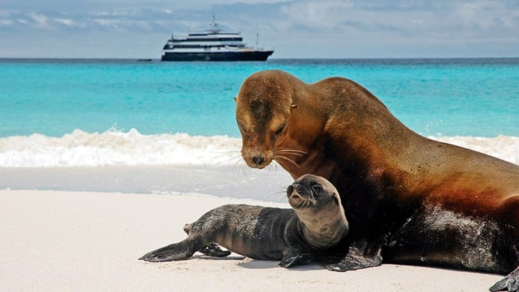 A sea lion and its pup on a white sand beach with turqoise water in the background. In the distance, the National Geographic Islander Galapagos cruise ship is anchored.