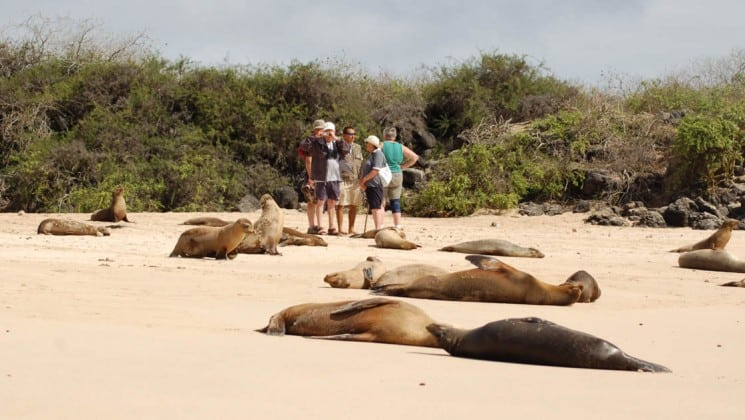 A group of passengers on the Mary Anne sailing ship explore the Galapagos Islands and stand on a sandy beach, behind sea lions sunbathing
