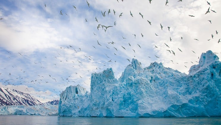 a flock of kittiwakes, a seabird, fly in the sky above an iceberg and the ocean, on the national geographic voyage to the northeast passage