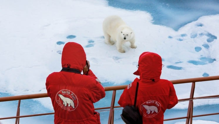 two passengers aboard the fifty years of victory ship take a photo of a polar bear on the ice sheet in the north pole