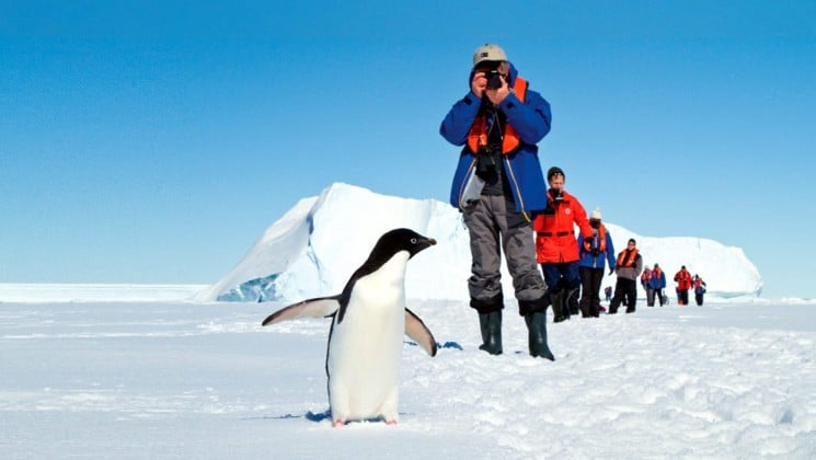 A penguin waddles through the snow while a person holds a camera to take a picture of antarctica