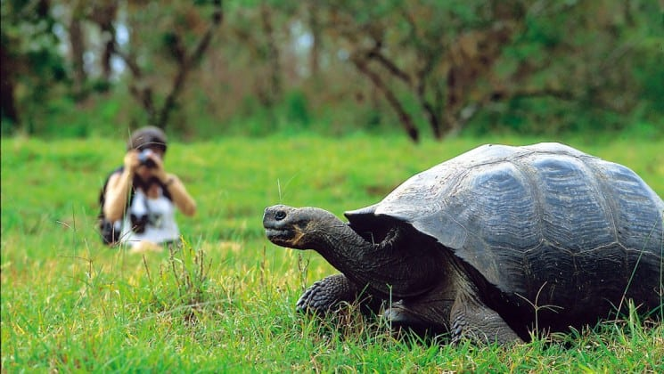 A guest of the National Geographic Islander cruise ship takes a photo of a tortoise at the Galapagos Islands.