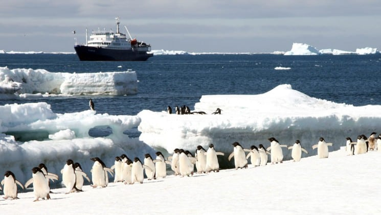 The 116-passenger research vessel plancius is anchored at sea while penguins run across a sheet of ice in antarctica in the foreground, as part of the polar circle cruise
