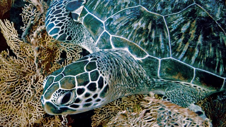 a close up photo of a sea turtle in indonesia