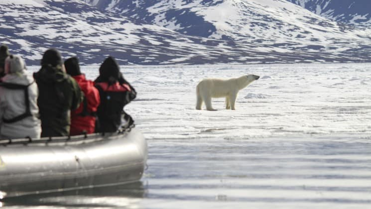 Passengers aboard a zodiac boat take a photo of a polar bear walking on the pack ice in the arctic circle in spitsbergen