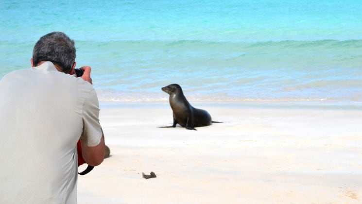 A guest from the ocean spray luxury cruise ship takes a photograph of a seal on a white sand beach next to tropical waters at the galapagos islands