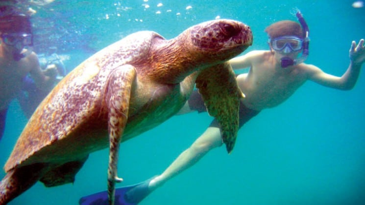 A boy wearing a snorkel dives underwater to get a better view of a sea turtle at the Galapagos Islands