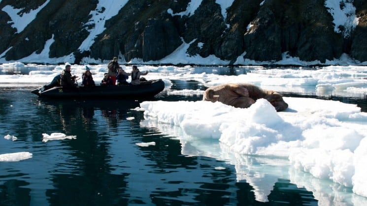 a walrus sleeps on an ice cap in the ocean while a zodiac motors nearby in the arctic circle