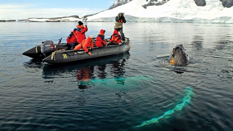 A zodiac boat pauses in the water so its guests can lean over to see the whale swimming below them in antarctica
