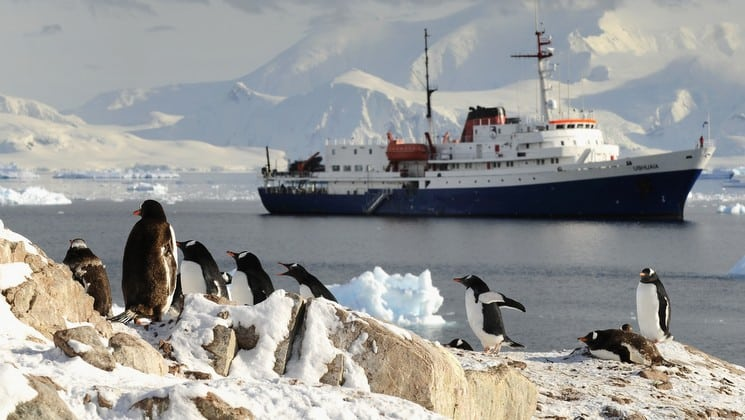 Penguins scamper on rocks in the foreground while a ship sails across the open sea in the background in antarctica