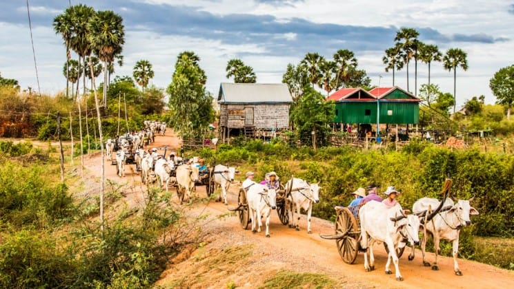 a row of carts pulled by oxen on a dirt road in cambodia