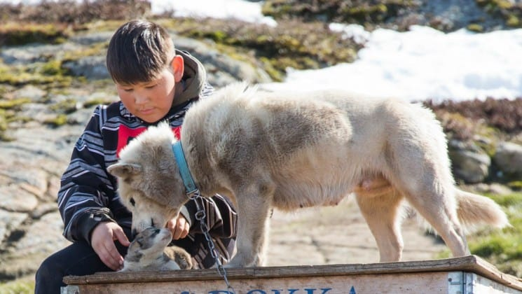 a boy in an inuit village in the arctic circle plays with a puppy and a kitten