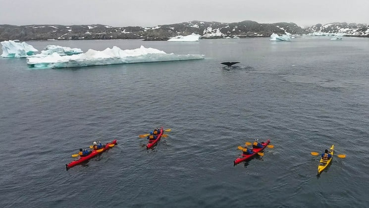 three kayakers paddle on the ocean toward an iceberg, while a whale's fluke breeches the ocean surface in the arctic circle