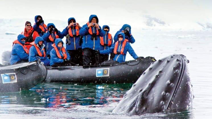 a humpback whale breeches the ocean surface in front of a zodiac boat full of people with cameras in antarctica