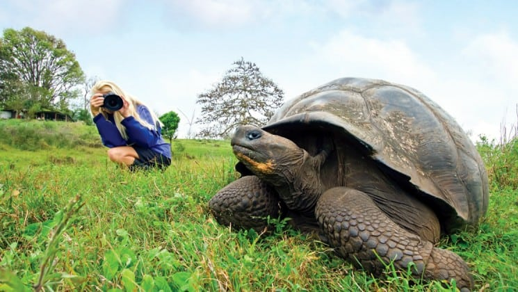A passenger from the National Geographic Endeavour takes a photo of a large tortoise on the grass at the Galapagos Islands
